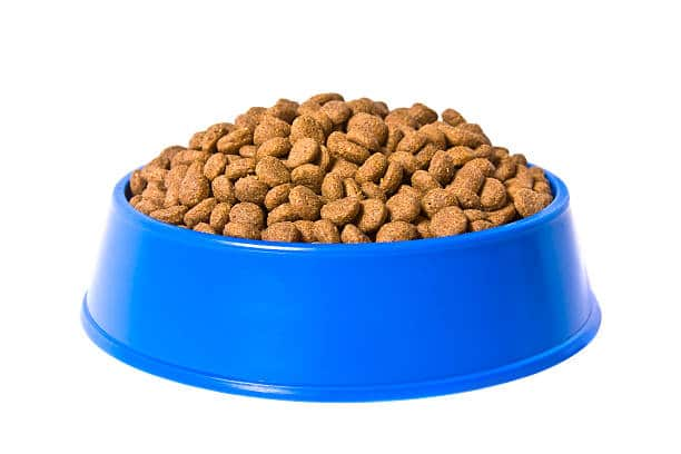 dry dog food in blue bowl