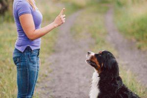 dog training hand signals