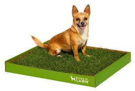 puppy pad with grass