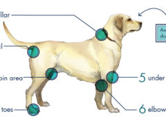 6 places dog have ticks